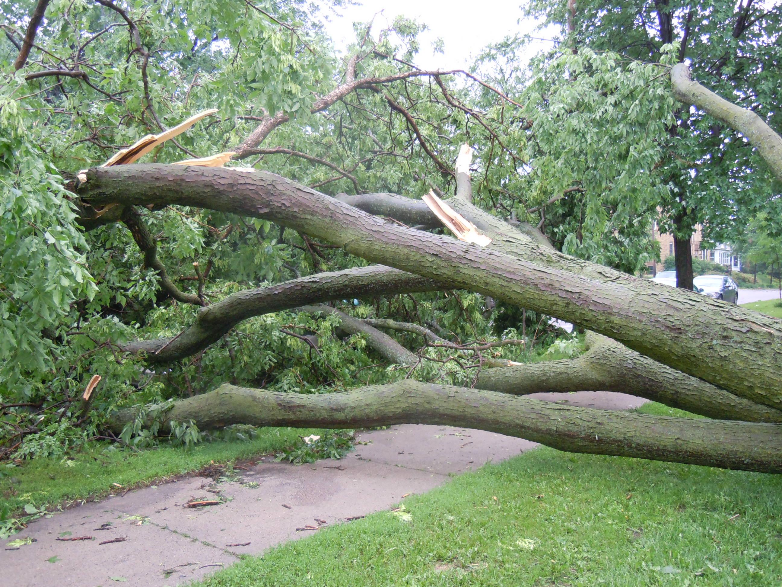 Mpls Storm 09