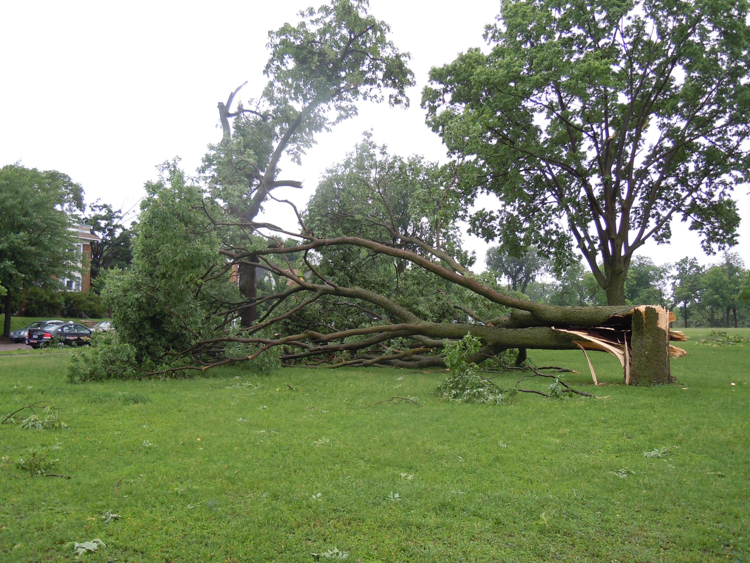 Mpls Storm 19